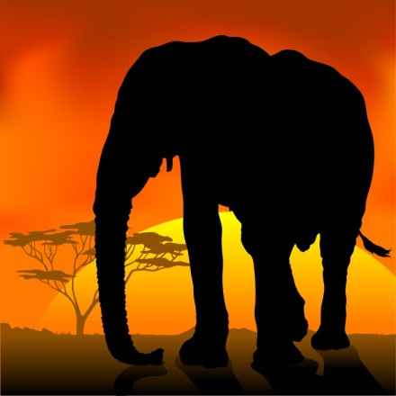 elephant silhouette sunset